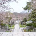室蘭八幡の桜(2012)