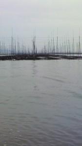 有明海の海苔畑