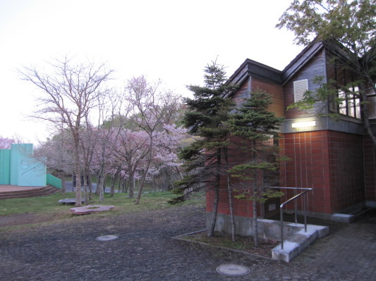 唐松平の桜 と さわやかトイレ