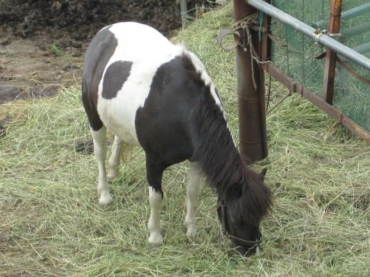牛っぽい馬w