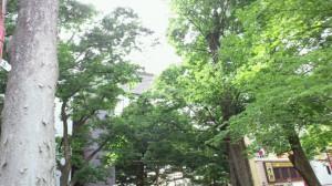 府中ケヤキ並木②
