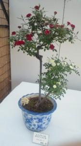 バラの盆栽その4