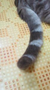 知人1号宅のネコのしっぽ
